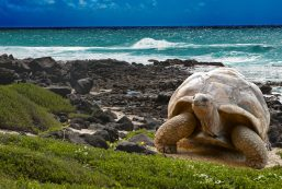Galapogas turtle FEATURE(1)