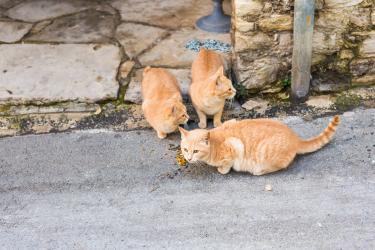 Iranian stray cats2