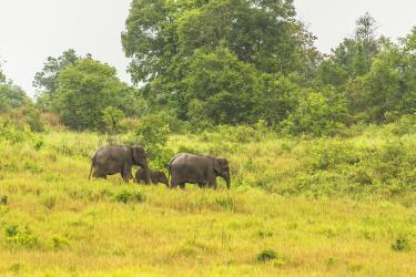 Main elephant photo